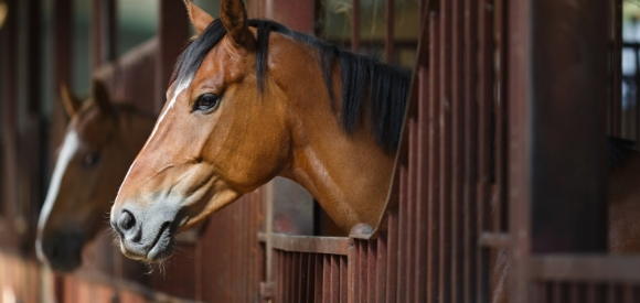 etudier-impact-physiologie-equine